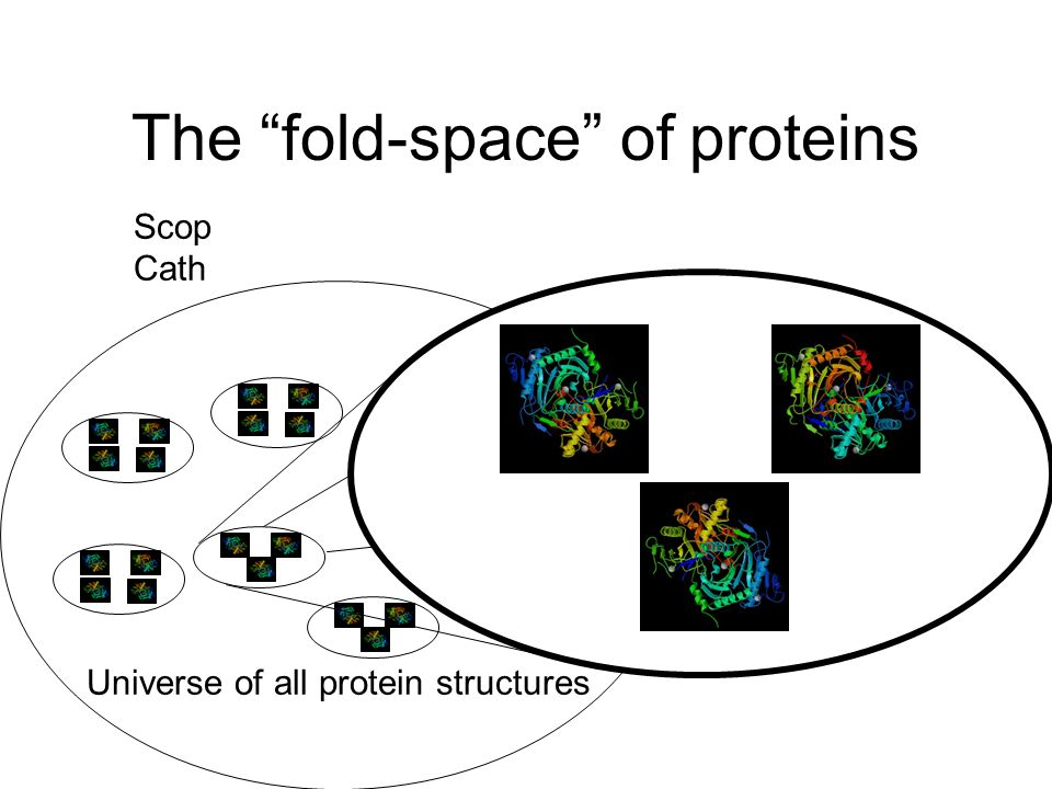Scop Cath The fold-space of proteins Universe of all protein structures