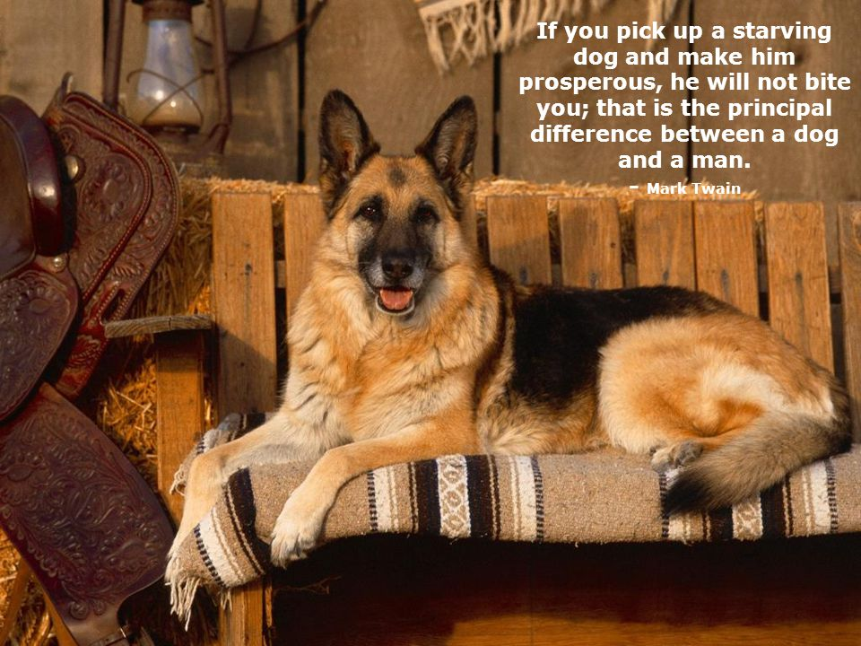 Dogs are not our whole life, but they make our lives whole. - Roger Caras