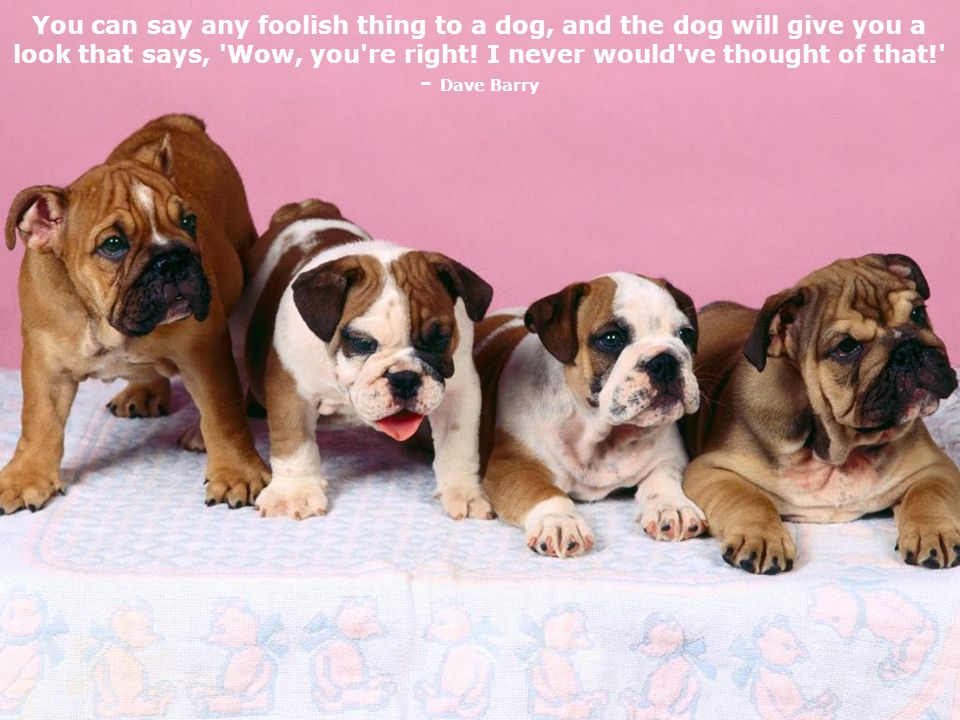 If you think dogs can t count, try putting three dog biscuits in your pocket and then giving Fido only two of them.
