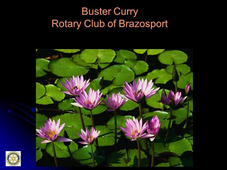 Buster Curry Rotary Club of Brazosport