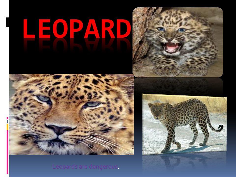 Leopards are dangerous.