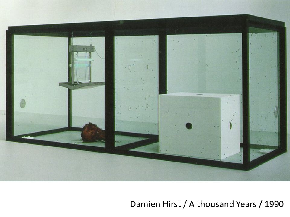 Damien Hirst / A thousand Years / 1990