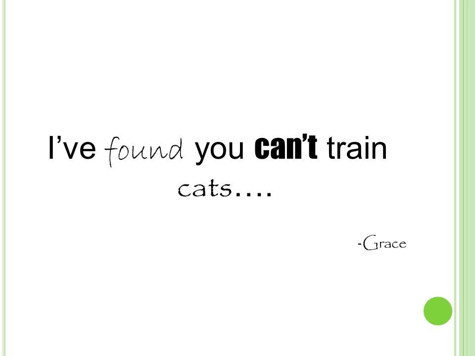 I've found you can't train cats …. - Grace