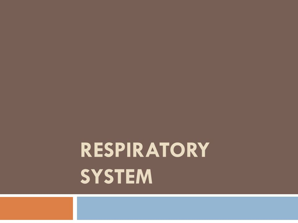 Respiratory System Function  Air distributor – all parts but Alveoli  Gas Exchanger - Alveoli  Air Filter - Nose  Air warmer – Nose/Mouth  Air humidifier – Nose/Mouth  Regulation of homeostasis, pH of Body