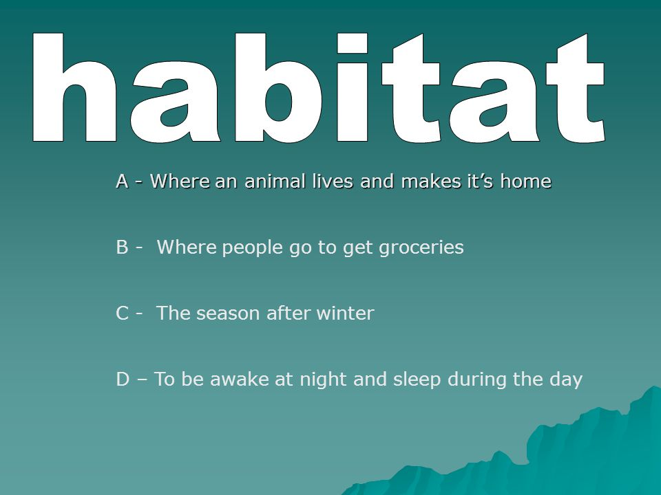 A - Where an animal lives and makes it's home B - Where people go to get groceries C - The season after winter D – To be awake at night and sleep during the day