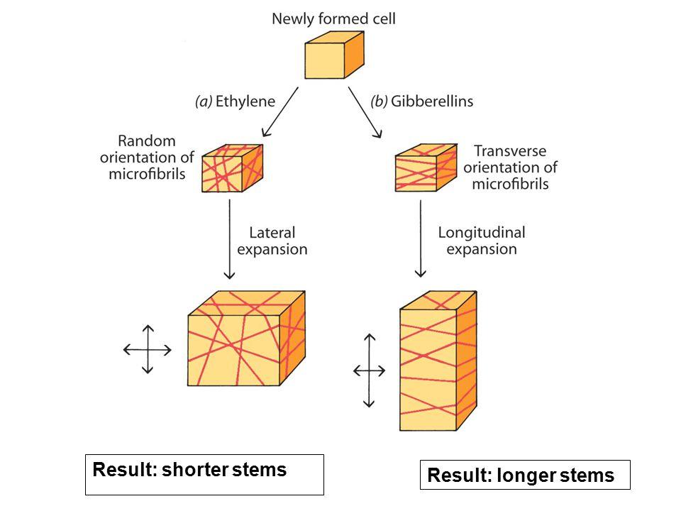 Result: shorter stems Result: longer stems