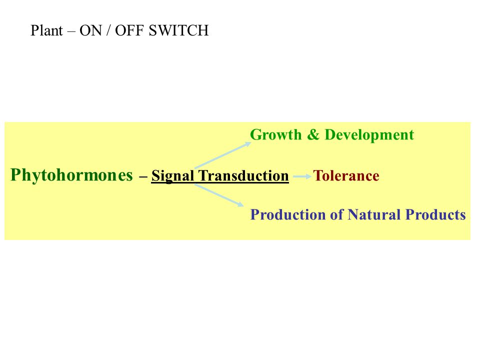 Growth & Development Phytohormones – Signal Transduction Tolerance Production of Natural Products Plant – ON / OFF SWITCH