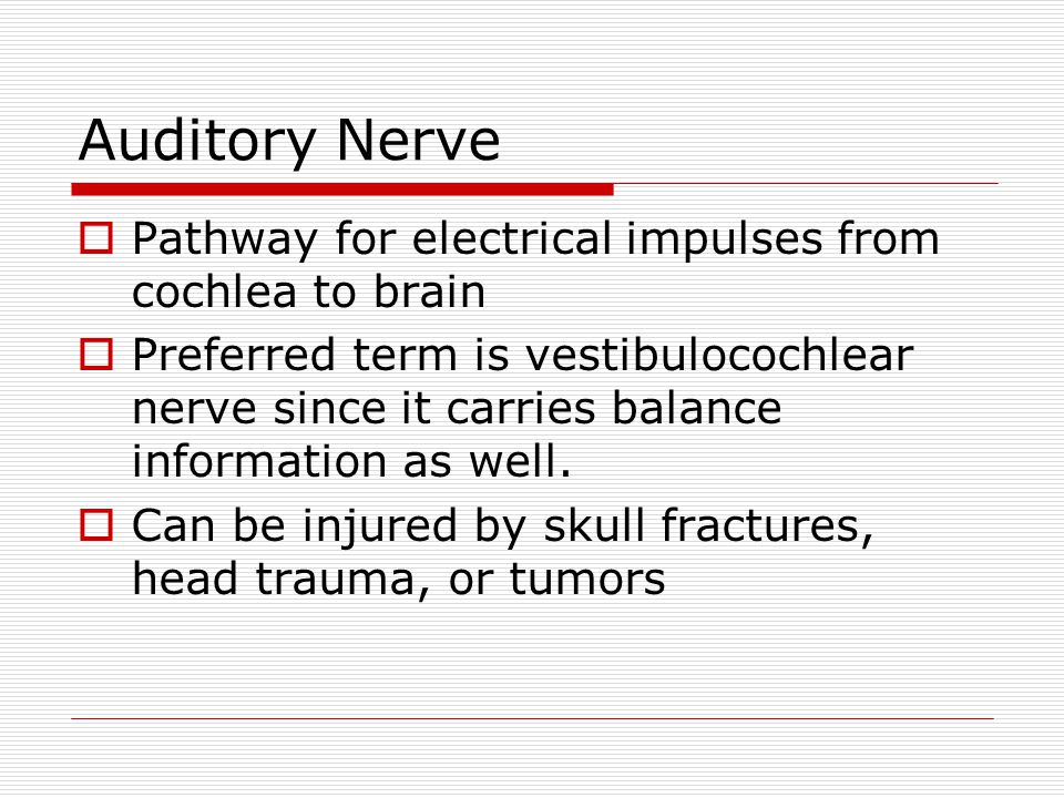 Auditory Nerve  Pathway for electrical impulses from cochlea to brain  Preferred term is vestibulocochlear nerve since it carries balance information as well.
