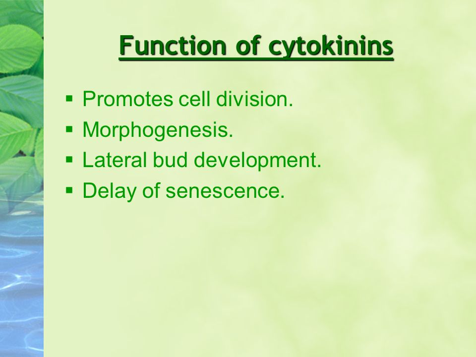 Function of cytokinins §Promotes cell division. §Morphogenesis. §Lateral bud development. §Delay of senescence.