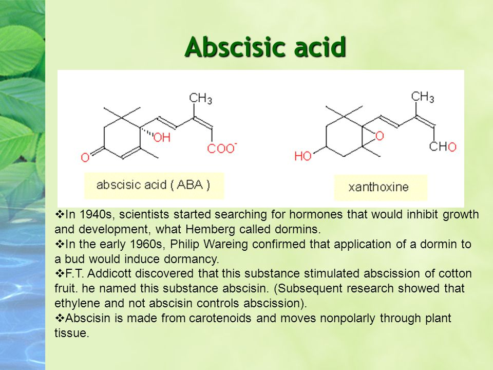 Abscisic acid  In 1940s, scientists started searching for hormones that would inhibit growth and development, what Hemberg called dormins.  In the e