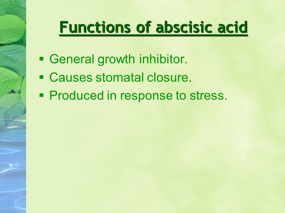 Functions of abscisic acid §General growth inhibitor. §Causes stomatal closure. §Produced in response to stress.