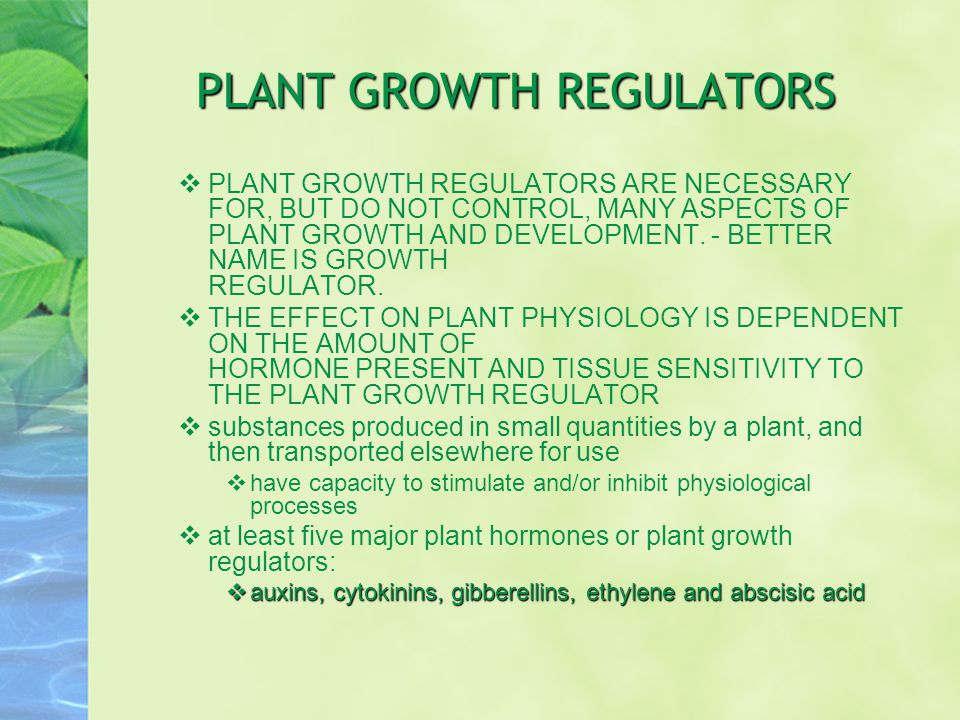 PLANT GROWTH REGULATORS  PLANT GROWTH REGULATORS ARE NECESSARY FOR, BUT DO NOT CONTROL, MANY ASPECTS OF PLANT GROWTH AND DEVELOPMENT. - BETTER NAME I