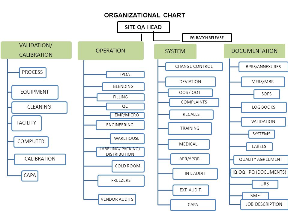 ORGANIZATIONAL CHART VALIDATION/ CALIBRATION PROCESS EQUIPMENT CLEANING FACILITY COMPUTER CALIBRATION CAPA OPERATION IPQA BLENDING FILLING QC EMP/MICRO ENGINEERING WAREHOUSE LABELING/ PACKING/ DISTRIBUTION COLD ROOM FREEZERS VENDOR AUDITS SITE QA HEAD FG BATCH RELEASE SYSTEM CHANGE CONTROL DEVIATION OOS / OOT COMPLAINTS RECALLS TRAINING MEDICAL APR/APQR INT.