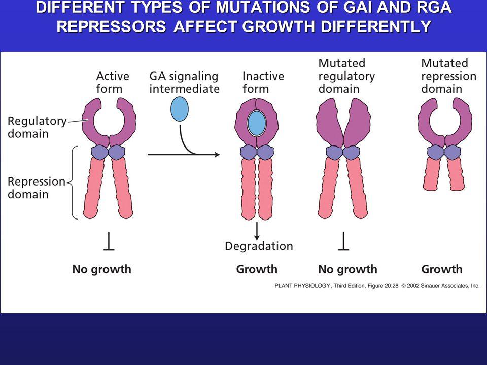 GAI and RGA are related repressor proteins Repression of GA Response Genes GA Response Genes Expressed