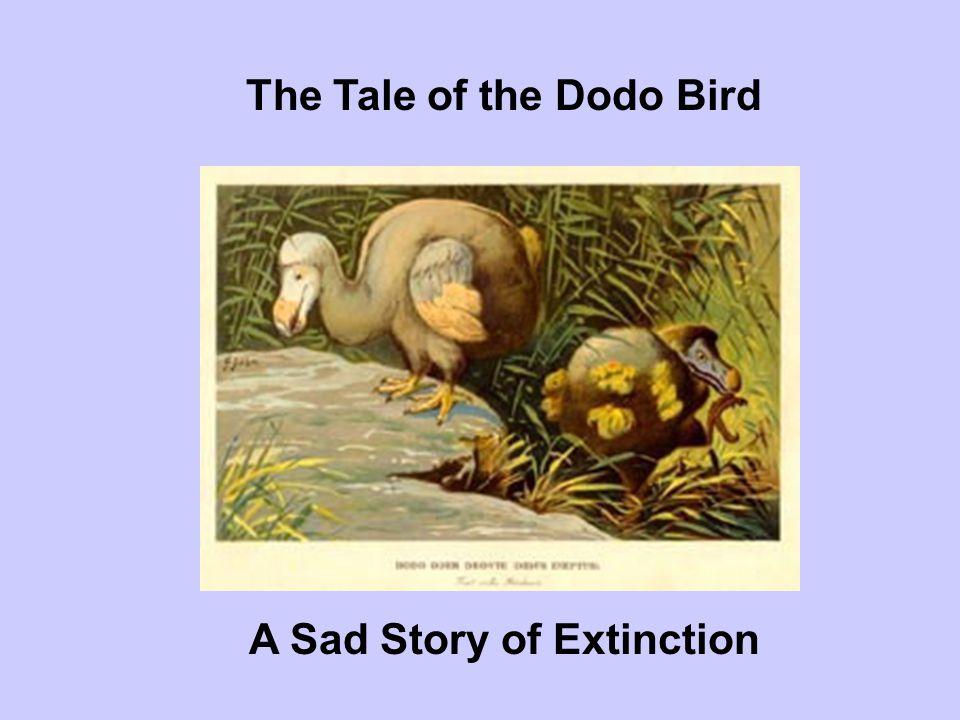 The Tale of the Dodo Bird A Sad Story of Extinction