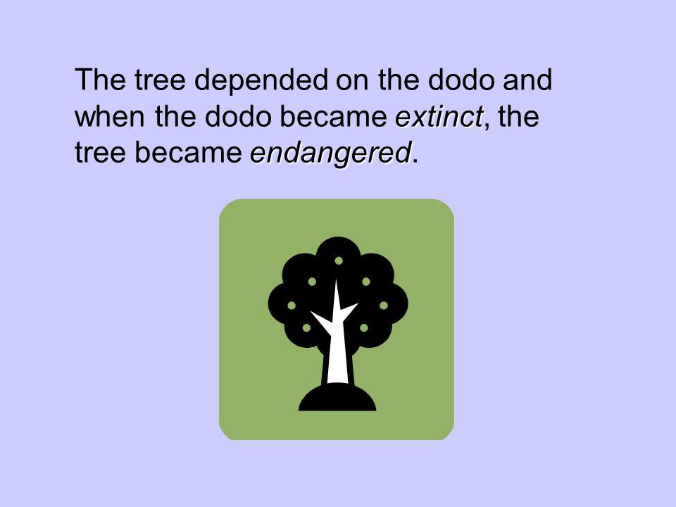 extinct endangered The tree depended on the dodo and when the dodo became extinct, the tree became endangered.