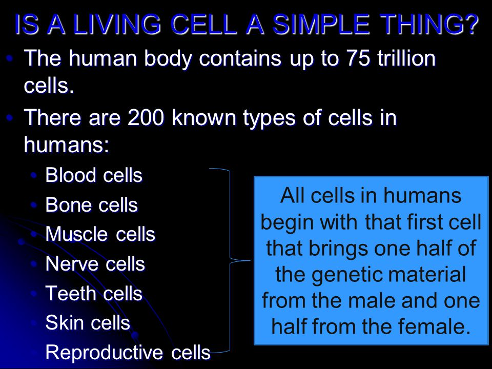 IS A LIVING CELL A SIMPLE THING? The human body contains up to 75 trillion cells.The human body contains up to 75 trillion cells. There are 200 known