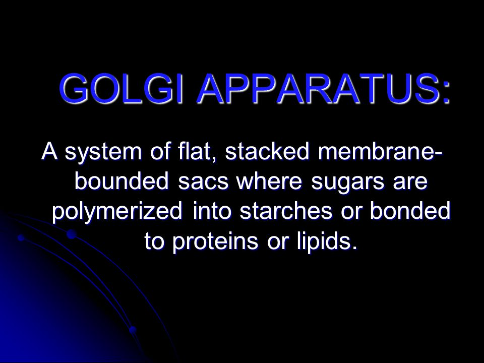 GOLGI APPARATUS: A system of flat, stacked membrane- bounded sacs where sugars are polymerized into starches or bonded to proteins or lipids.