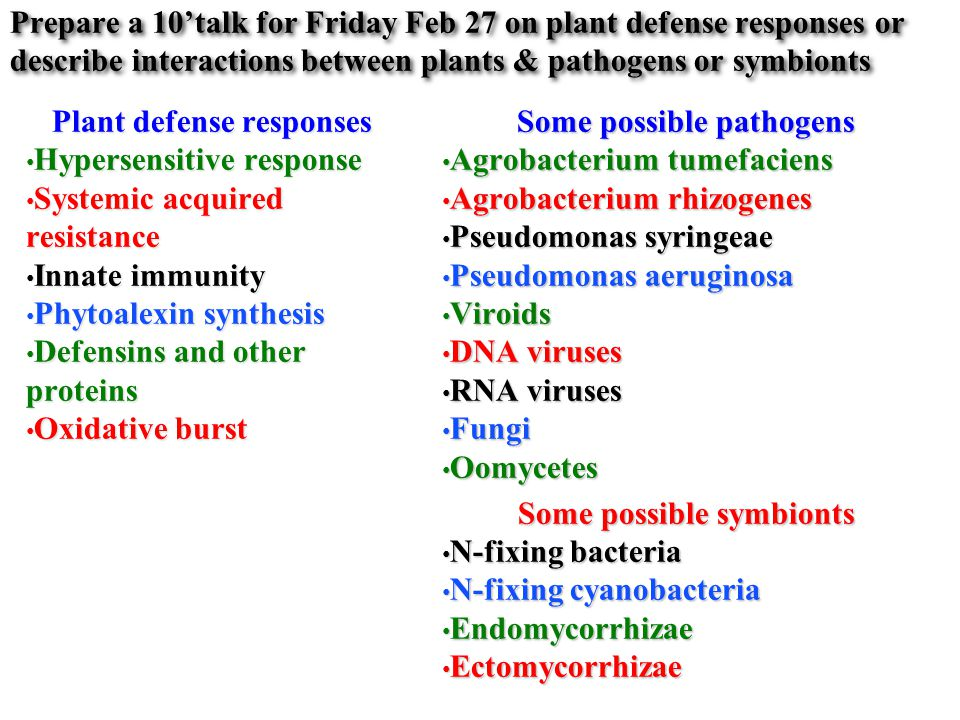 Prepare a 10'talk for Friday Feb 27 on plant defense responses or describe interactions between plants & pathogens or symbionts Plant defense responses Hypersensitive response Hypersensitive response Systemic acquired resistance Systemic acquired resistance Innate immunity Innate immunity Phytoalexin synthesis Phytoalexin synthesis Defensins and other proteins Defensins and other proteins Oxidative burst Oxidative burst Some possible pathogens Agrobacterium tumefaciens Agrobacterium tumefaciens Agrobacterium rhizogenes Agrobacterium rhizogenes Pseudomonas syringeae Pseudomonas syringeae Pseudomonas aeruginosa Pseudomonas aeruginosa Viroids Viroids DNA viruses DNA viruses RNA viruses RNA viruses Fungi Fungi Oomycetes Oomycetes Some possible symbionts N-fixing bacteria N-fixing bacteria N-fixing cyanobacteria N-fixing cyanobacteria Endomycorrhizae Endomycorrhizae Ectomycorrhizae Ectomycorrhizae