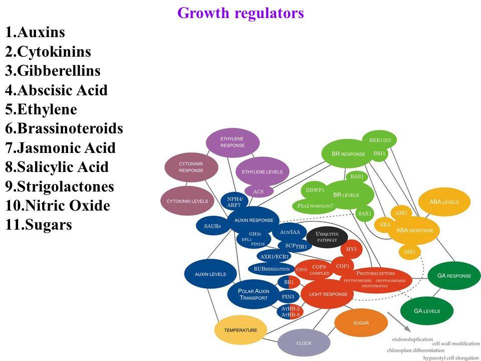 Growth regulators 1.Auxins 2.Cytokinins 3.Gibberellins 4.Abscisic Acid 5.Ethylene 6.Brassinoteroids 7.Jasmonic Acid 8.Salicylic Acid 9.Strigolactones 10.Nitric Oxide 11.Sugars