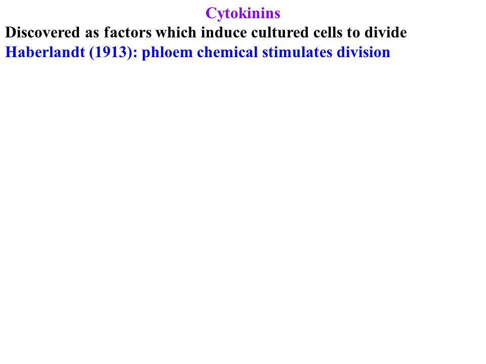 Cytokinins Discovered as factors which induce cultured cells to divide Haberlandt (1913): phloem chemical stimulates division