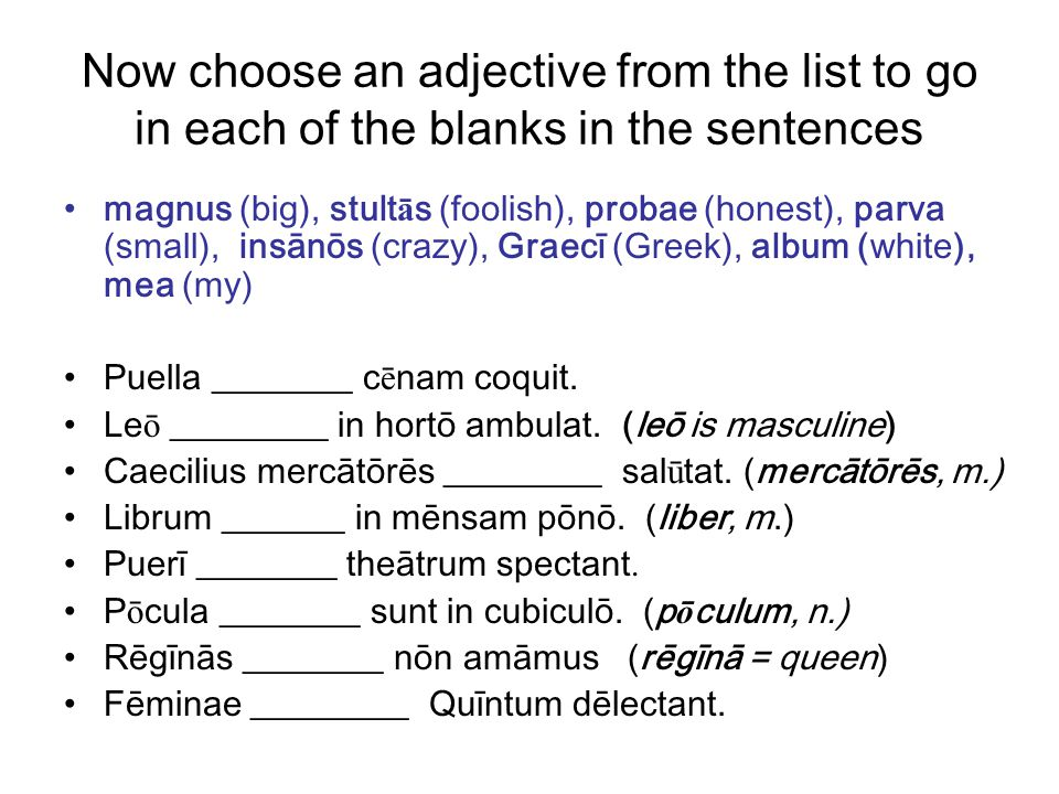 Now choose an adjective from the list to go in each of the blanks in the sentences magnus (big), stult ā s (foolish), probae (honest), parva (small), insānōs (crazy), Graecī (Greek), album (white), mea (my) Puella ________ c ē nam coquit.