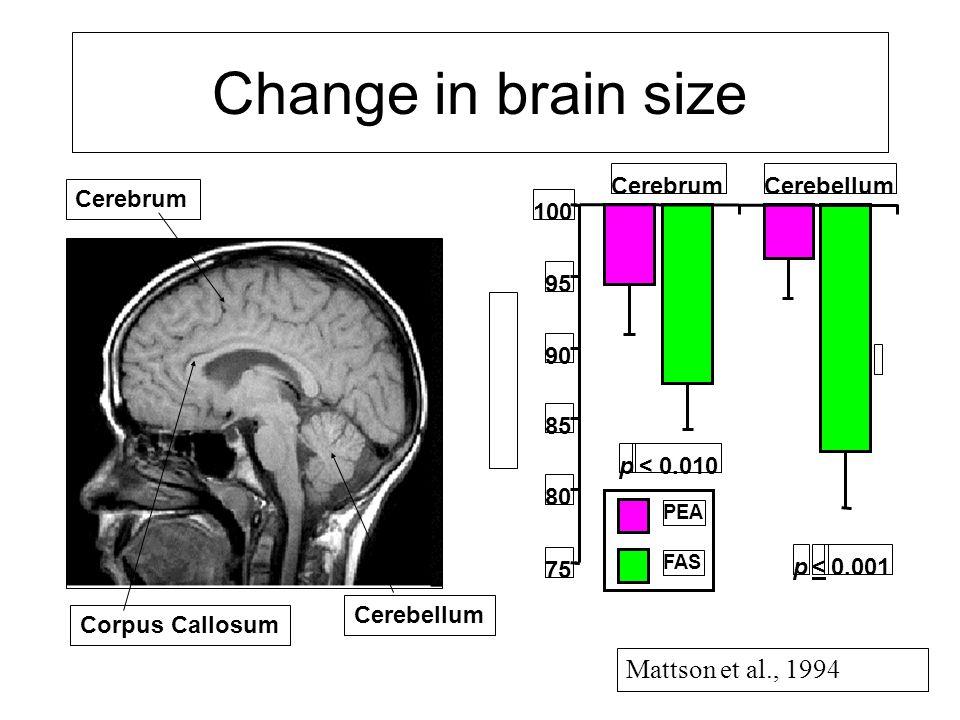 *** ** CerebrumCerebellum 75 80 85 90 95 100 PEA FAS <p 0.001 p < 0.010 Cerebrum Cerebellum Corpus Callosum Mattson et al., 1994 Change in brain size