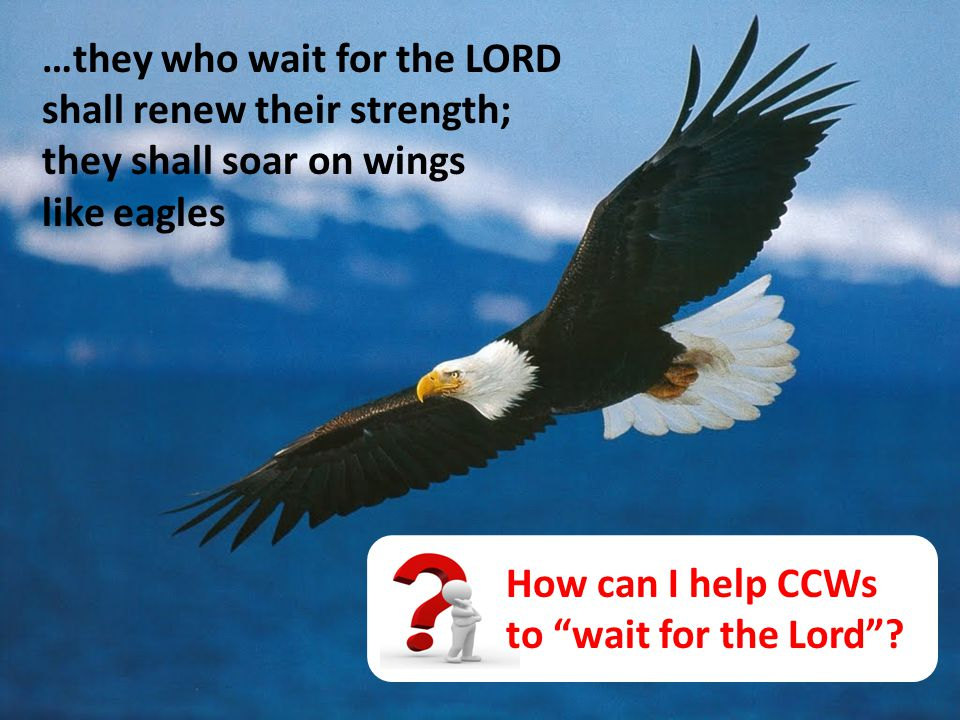 …they who wait for the LORD shall renew their strength; they shall soar on wings like eagles How can I help CCWs to wait for the Lord ?