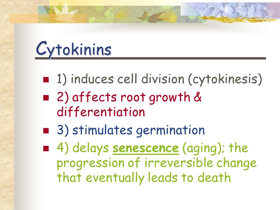 C ytokinins 1) induces cell division (cytokinesis) 2) affects root growth & differentiation 3) stimulates germination 4) delays senescence (aging); the progression of irreversible change that eventually leads to death