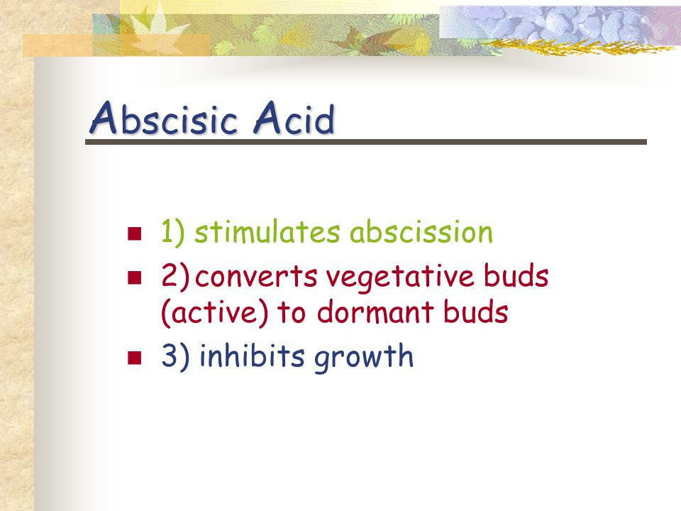 A bscisic A cid 1) stimulates abscission 2)converts vegetative buds (active) to dormant buds 3) inhibits growth