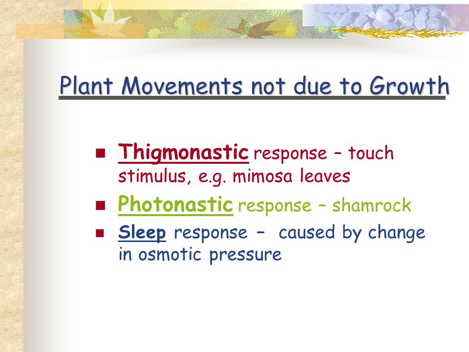 Plant Movements not due to Growth Thigmonastic response – touch stimulus, e.g.