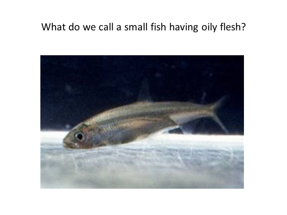 What do we call a small fish having oily flesh