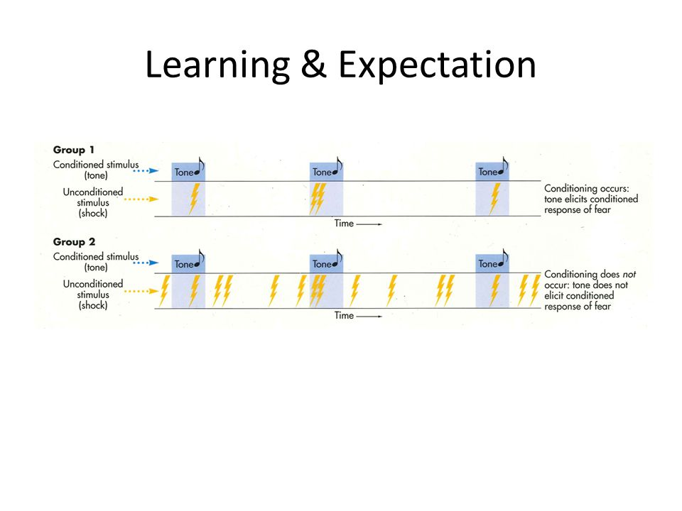Learning & Expectation