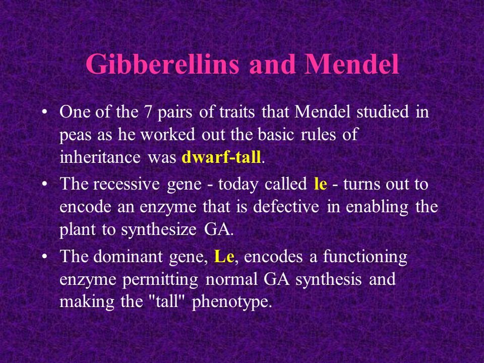 Gibberellins and Mendel One of the 7 pairs of traits that Mendel studied in peas as he worked out the basic rules of inheritance was dwarf-tall.