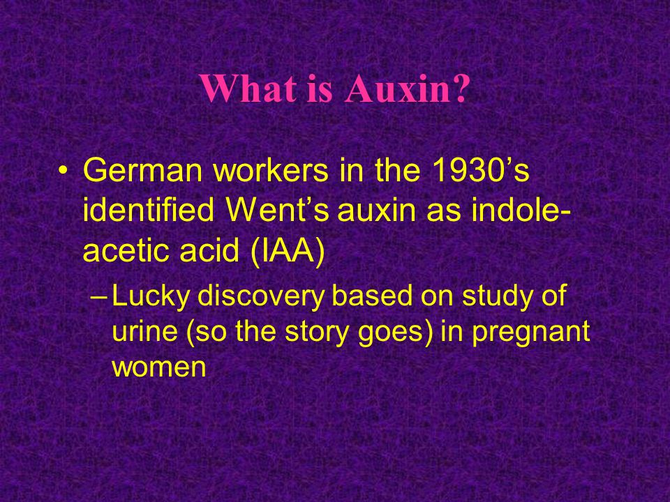 What is Auxin.