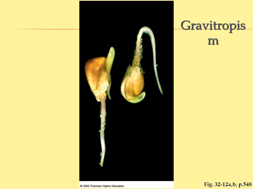 Fig. 32-12a,b, p.548 Gravitropis m
