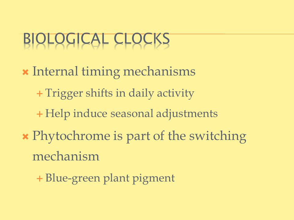  Internal timing mechanisms  Trigger shifts in daily activity  Help induce seasonal adjustments  Phytochrome is part of the switching mechanism  Blue-green plant pigment