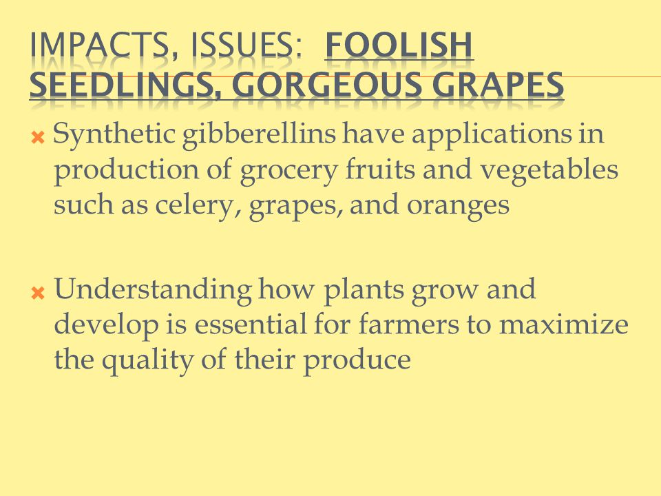  Synthetic gibberellins have applications in production of grocery fruits and vegetables such as celery, grapes, and oranges  Understanding how plants grow and develop is essential for farmers to maximize the quality of their produce