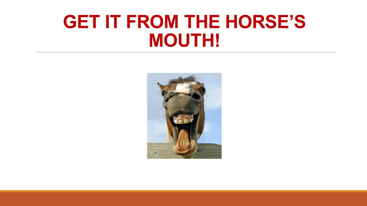 GET IT FROM THE HORSE'S MOUTH!