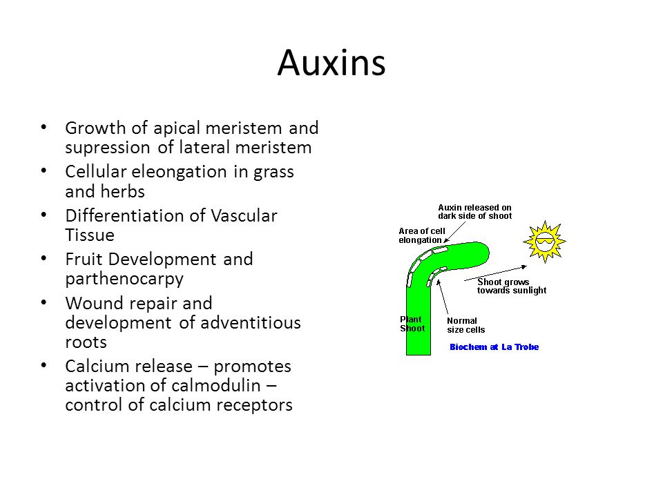 Auxins Growth of apical meristem and supression of lateral meristem Cellular eleongation in grass and herbs Differentiation of Vascular Tissue Fruit D