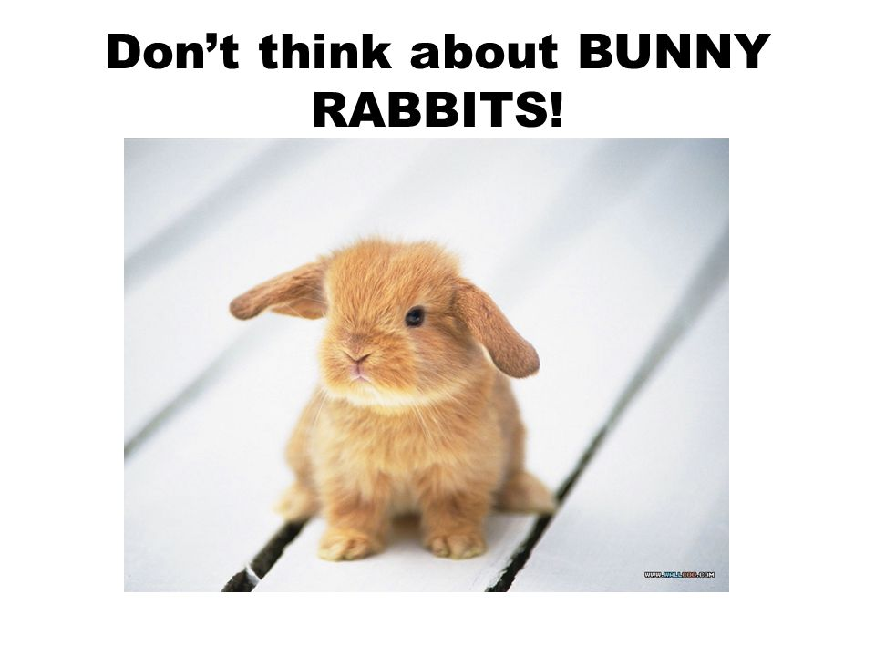 Don't think about BUNNY RABBITS!
