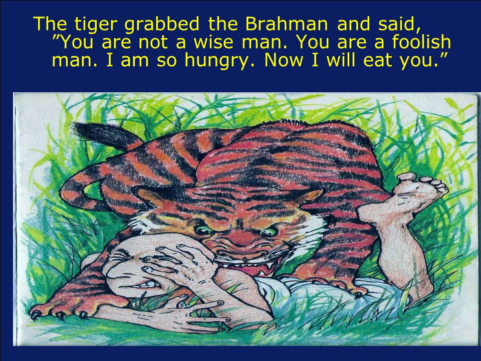 The tiger grabbed the Brahman and said, You are not a wise man.