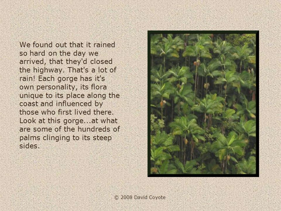 © 2008 David Coyote The entire coast is a series of tropical gorges and lush flowering tree vistas.