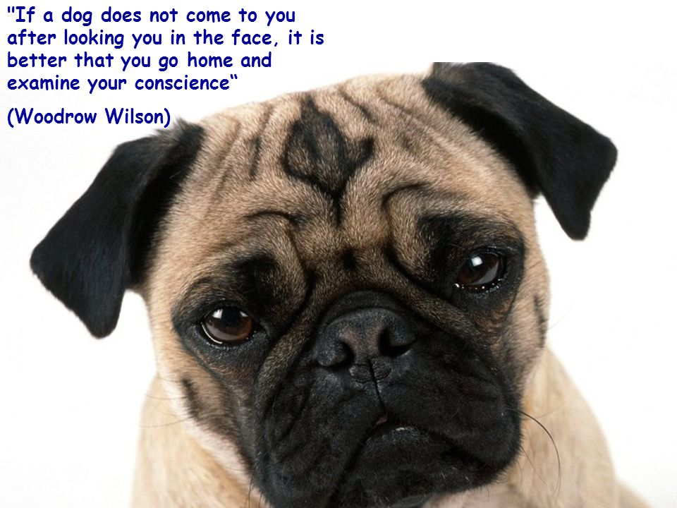 You can live without a dog, but it is not worthwhile.