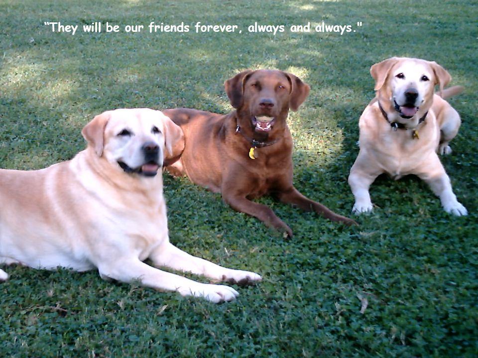 Just thinking that my dog loves me more than I love him, I feel shame. (Konrad Lorenz)