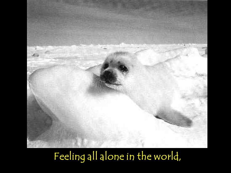 Feeling all alone in the world,