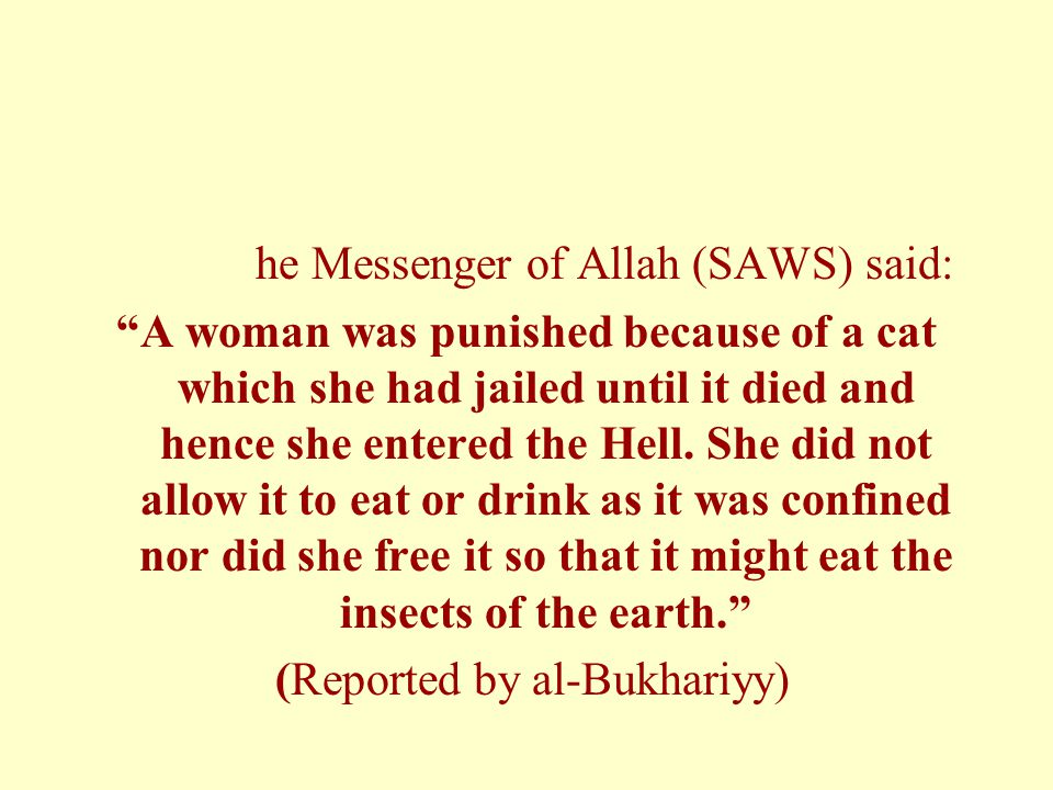 """he Messenger of Allah (SAWS) said: """"A woman was punished because of a cat which she had jailed until it died and hence she entered the Hell. She did n"""