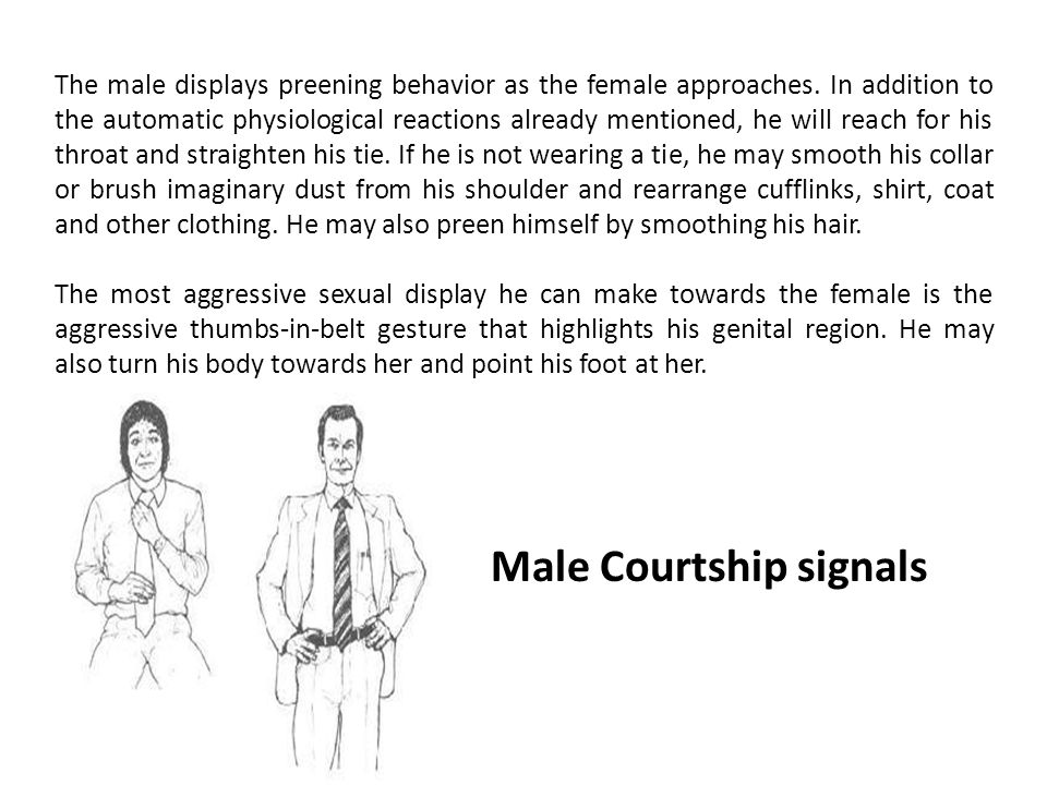 Male Courtship signals The male displays preening behavior as the female approaches.