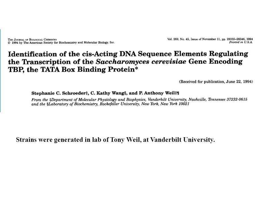Strains were generated in lab of Tony Weil, at Vanderbilt University.