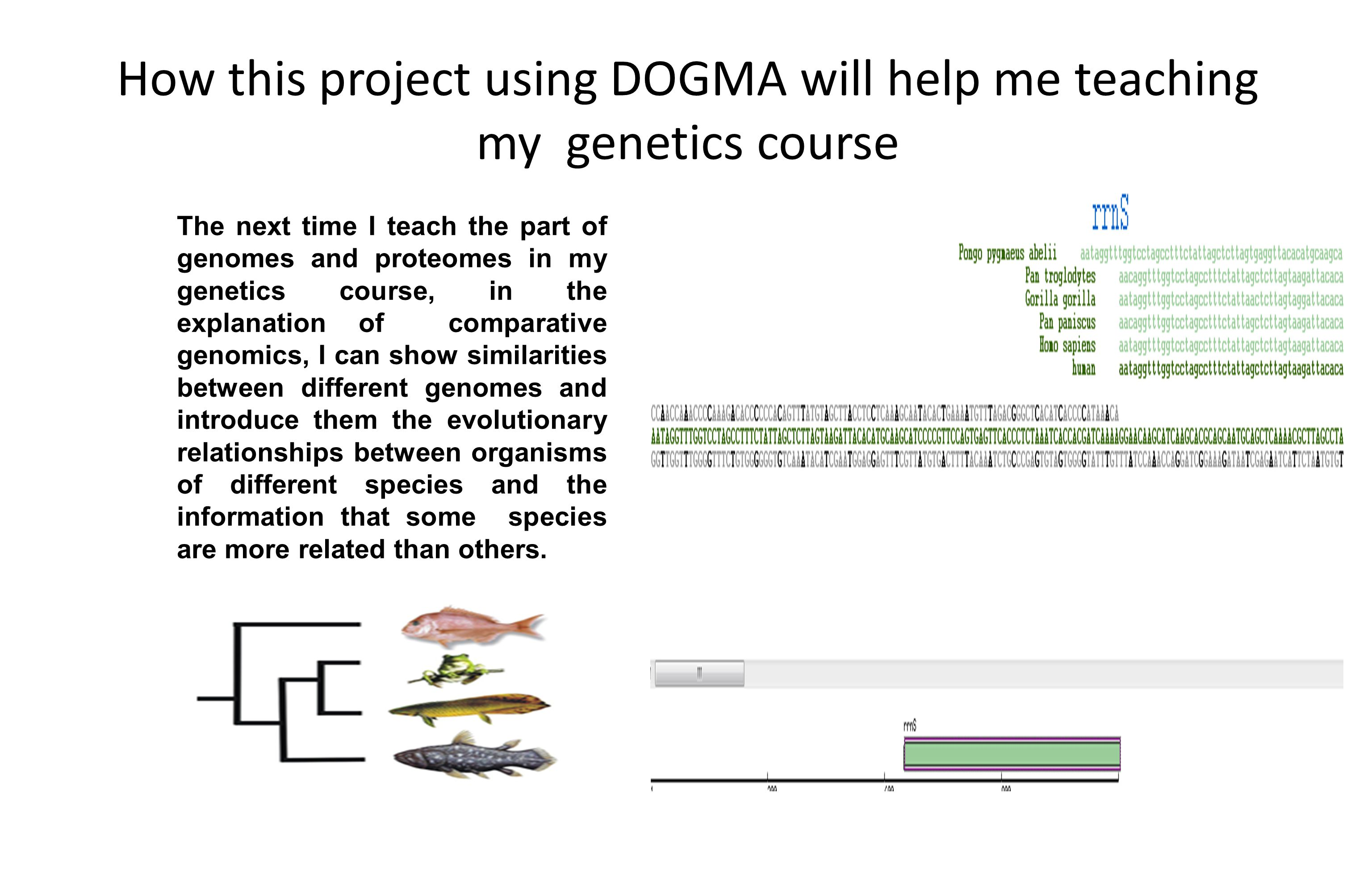 How this project using DOGMA will help me teaching my genetics course The next time I teach the part of genomes and proteomes in my genetics course, in the explanation of comparative genomics, I can show similarities between different genomes and introduce them the evolutionary relationships between organisms of different species and the information that some species are more related than others.